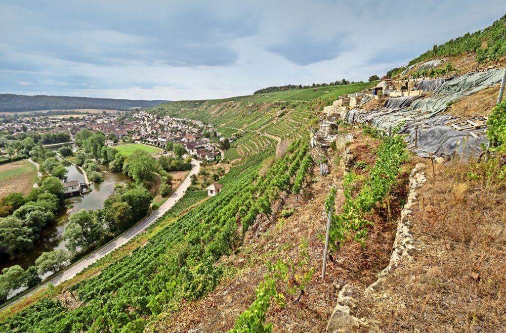 Die Trockenmauer des Weinbergs bei Roßwag wird saniert – Agrarminister Peter Hauk hilft symbolisch dabei mit. Foto: factum/Weise