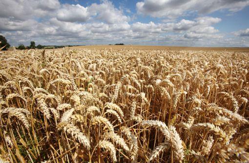Droht einer Milliarde Menschen Hunger?