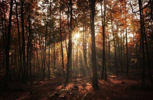 Aktionstag für junge Retter des Waldes