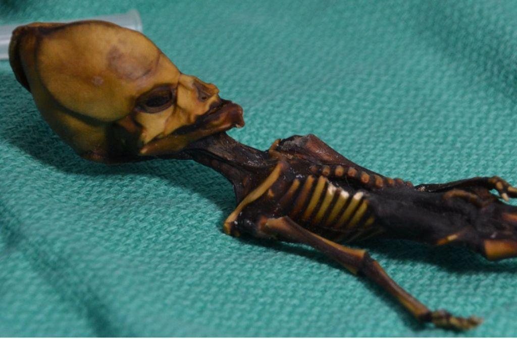 Fünf Jahre intensiver DNA-Forschung zeigen: Das winzige, nur 13 Zentimeter lange mumifizierte Skelett mit dem bizarr langgezogenen Schädel und den übergroßen Augenhöhlen ist eindeutig das eines weiblichen Menschen. Foto: dpa