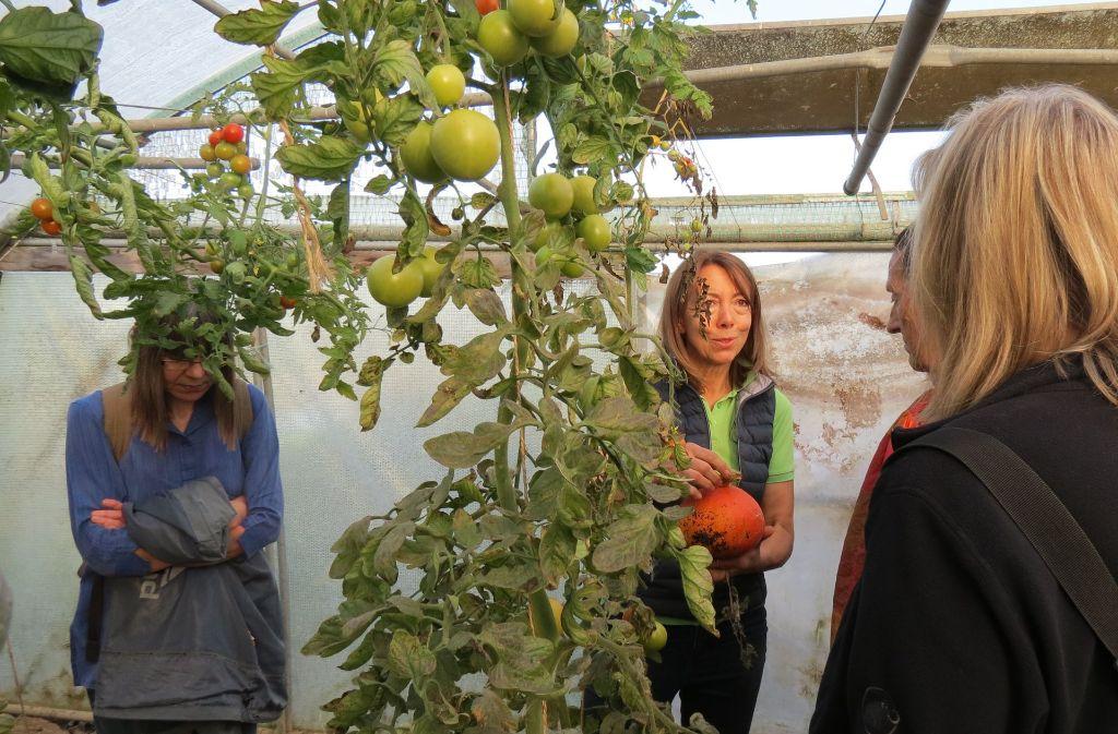Monika Mayer und ihr Mann bauen Gemüse, Obst und Getreide  an. Verkauft wird im Hofladen und auf dem Markt. Foto: Julia Bosch