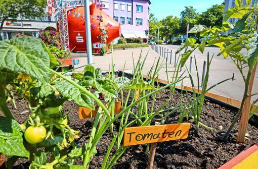 Pfundige Zeiten: gesundes Wachstum am Schillerplatz