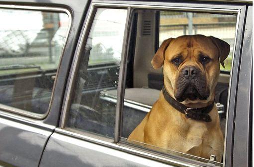 Tests für Hundehalter