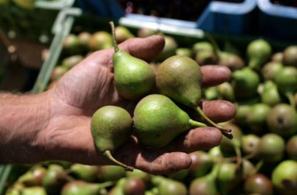 Die kleine Birnensorte ist eine echte schwäbische Spezialität. Foto: Zweygarth