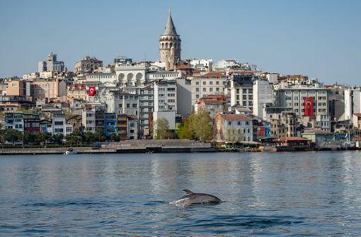 Delfine tummeln sich im Bosporus
