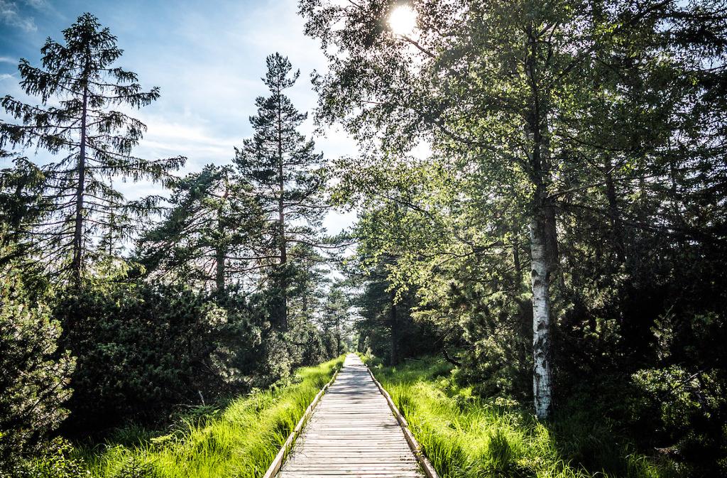 Wandergenuss inmitten einer intakten und abwechslungsreichen Natur  Foto: Tourismus GmbH Nördlicher Schwarzwald