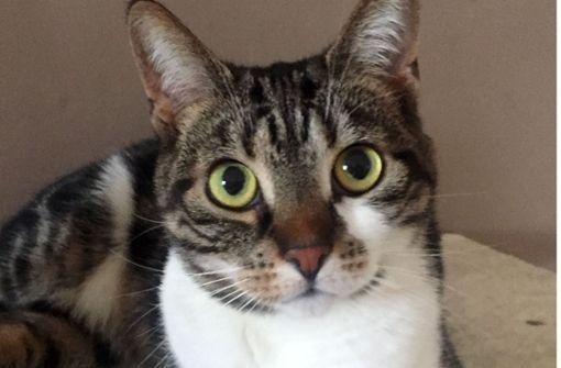 Wasserschaden: Katzen öffnen Hahn