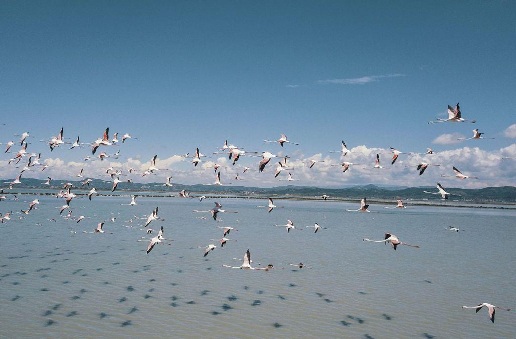 In der Lagune von Narta tummeln sich Flamingos und andere Vogelarten. Foto: AP/Hektor Pustina
