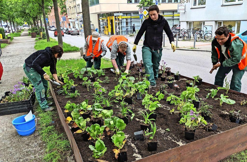 In so ein elf Quadratmeter großes Beet passen richtig viele Pflanzen. Foto: Jürgen Brand