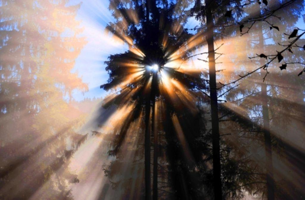 Nur vordergründig geht es im Nordschwarzwald um Argumente: dahinter stecken tiefe Gefühle und Wertvorstellungen. Foto: dpa