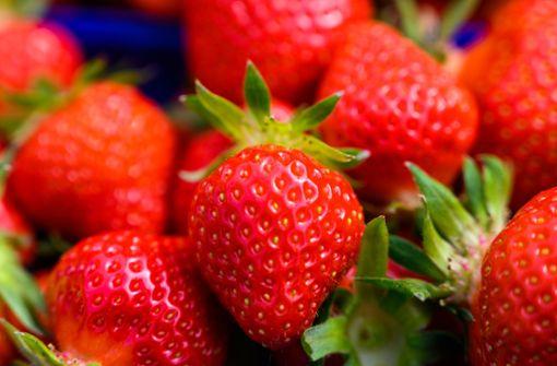 Diebe räumen Erdbeerfeld ab