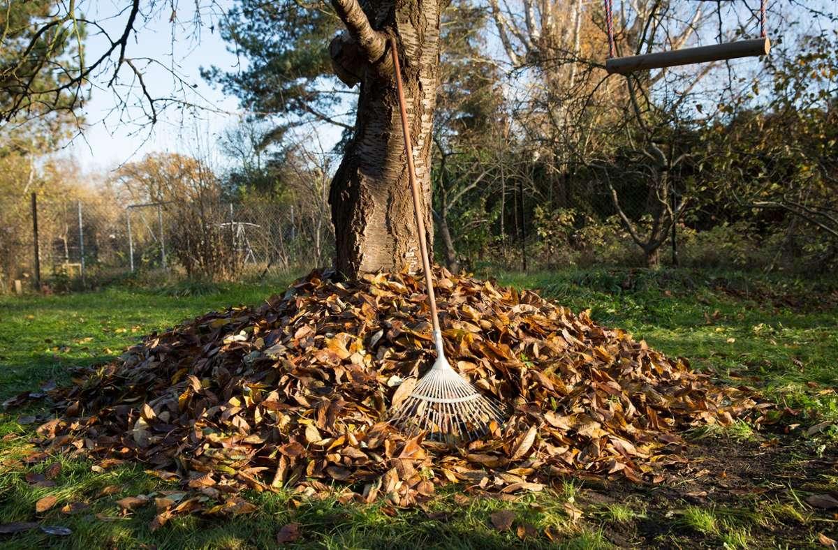 Laubhaufen sind nicht nur Abfall: Heruntergefallenes Laub bietet Igeln und anderen kleinen Säugetieren sowie Insekten, Reptilien und Amphibien einen Unterschlupf für Herbst und Winter. Foto: Florian Schuh/dpa