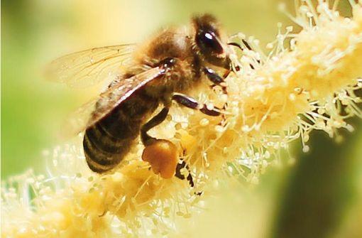 Bienenkino in Rudersberg