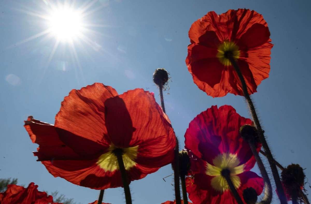 Im Südwesten wird es am Donnerstag sonnig und warm. Foto: dpa/Patrick Seeger