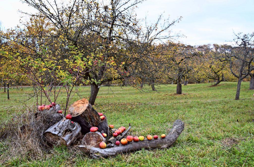 Wenn  Obstbäume nicht regelmäßig  beschnitten werden, fallen sie irgendwann um. Foto: Alexandra Kratz