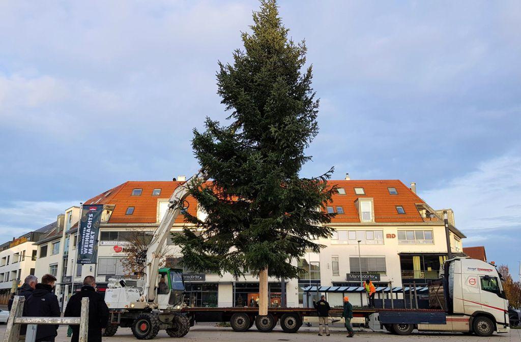 Der  rund 1,3 Tonnen schwere Baum kommt auf dem Löwen-Markt an. Foto: Tatjana Eberhardt