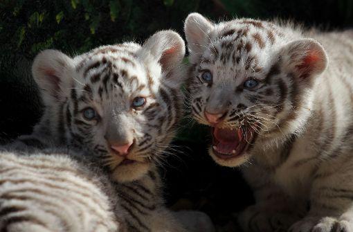 Tierischer Nachwuchs im Zoo von Mexiko
