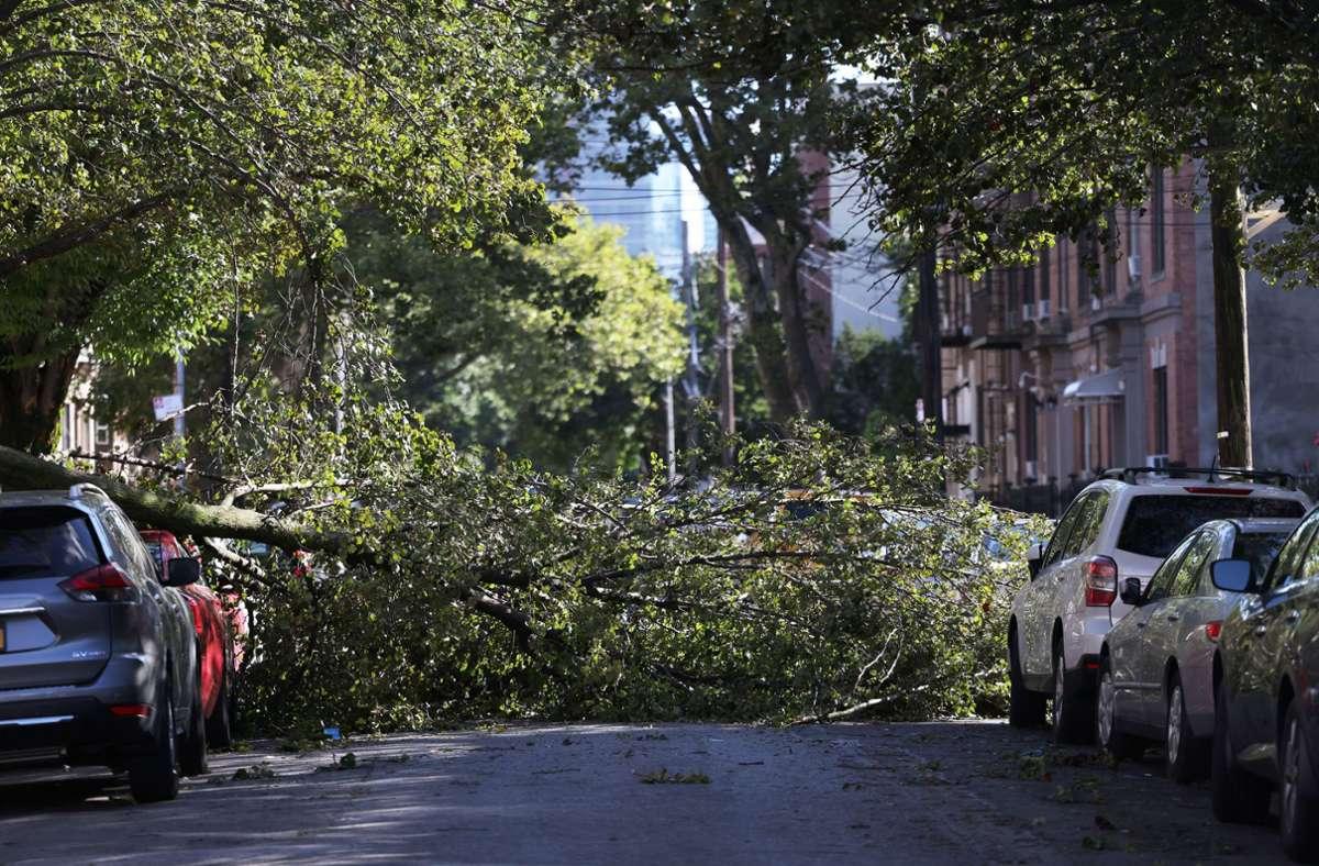 In den USA waren am Mittwoch Millionen Menschen  ohne Strom, weil umgestürzte Bäume elektrische Leitungen beschädigt hatten. Foto: AFP/Michael M. Santiago