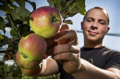 Äpfel sind mehr als nur Obst