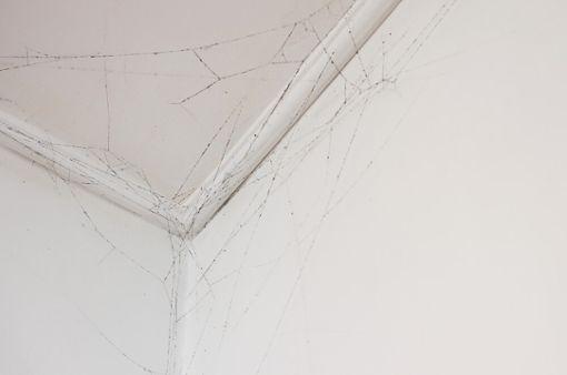 Vorschaubild zum Artikel Spinnweben entfernen!