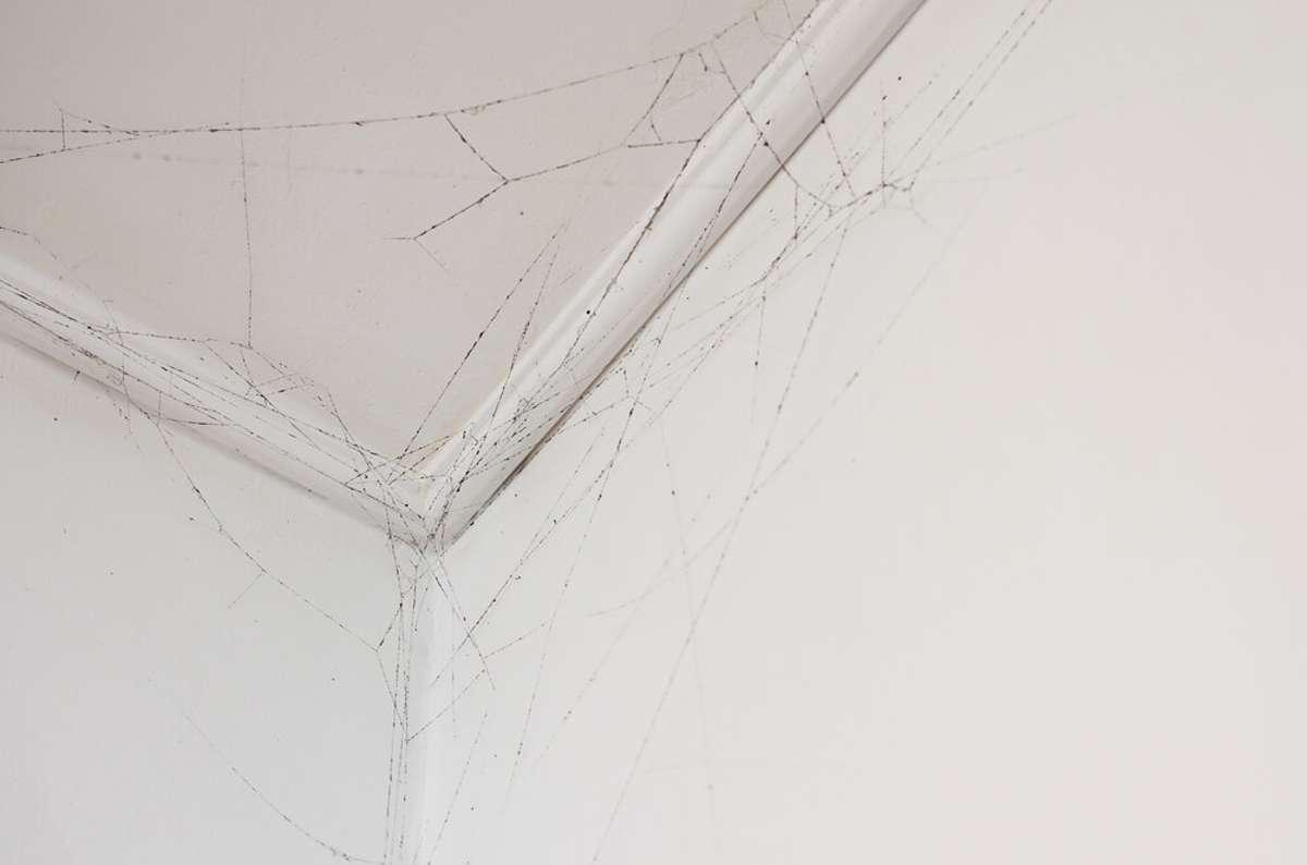 So entfernen Sie die Spinnweben. Foto: Yevhen Prozhyrko / shutterstock.com