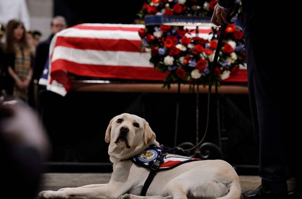 Labrador Sully durfte auch ins Kapitol in Washington, wo der frühere US-Präsident George H.W. Bush aufgebahrt liegt. Foto: AFP