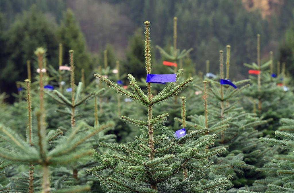 Unbekannte haben in Schwetzingen Weihnachtsbäume gestohlen. Foto: dpa