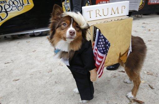 Auch Hunde feiern Halloween