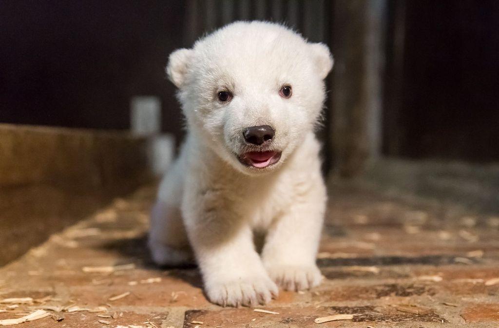 Seine Freunde dürfen den kleinen Eisbären nun Fritz nennen. Foto: Tierpark Berlin/dpa