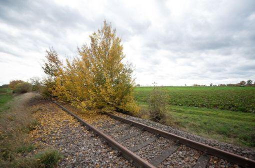 Studie zu stillgelegten Bahnstrecken: Hoffnung für über 30 Regionen