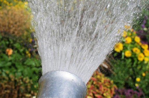Trotz Starkregen: Gärtner tränken Blumenbeete