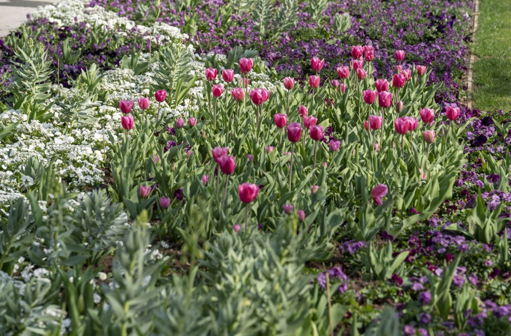 Eine Woche vor der Eröffnung blüht es auf der Bundesgartenschau schon. Foto:
