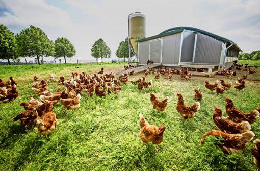 Kein Hühnerstall ohne Amtssegen