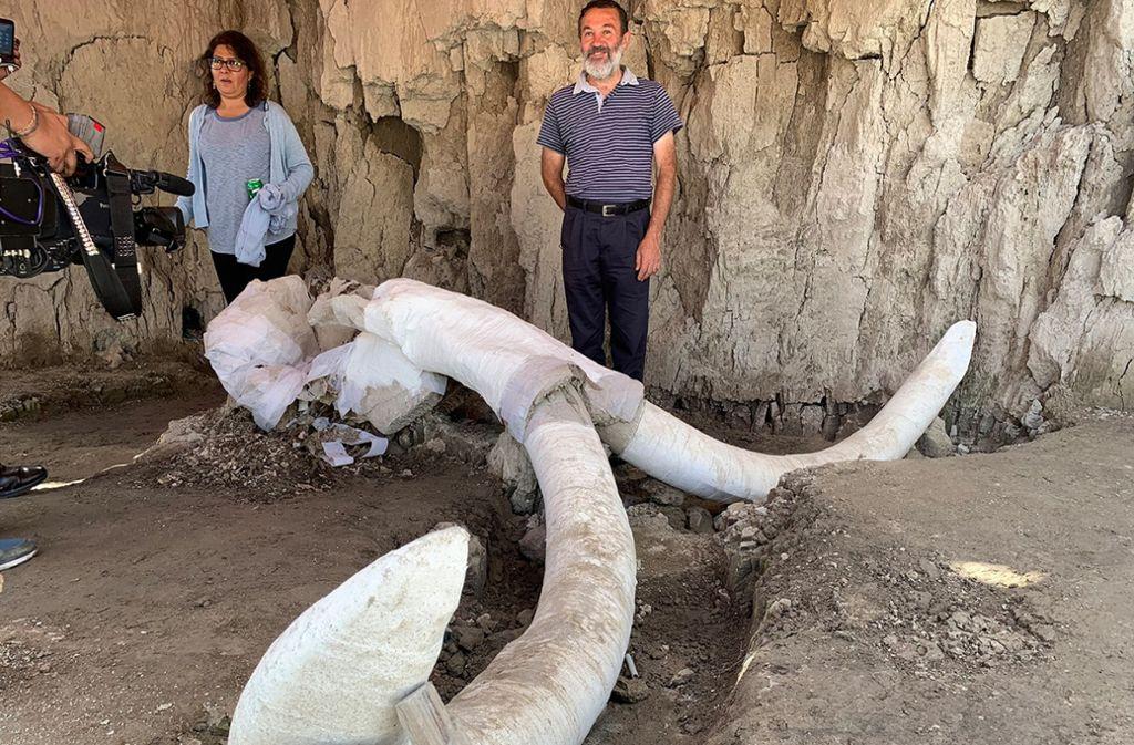 Archäologen der INAH stehen auf einer Ausgrabung neben einem Schädel eines Mammuts. Archäologen haben nach eigenen Angaben rund 15000 Jahre alte Fallgruben und die Überreste von 14 Mammuts in Mexiko entdeckt. Foto: Antonio Díaz/El Universal via Z