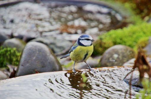 Tränken können   Wildvögel retten