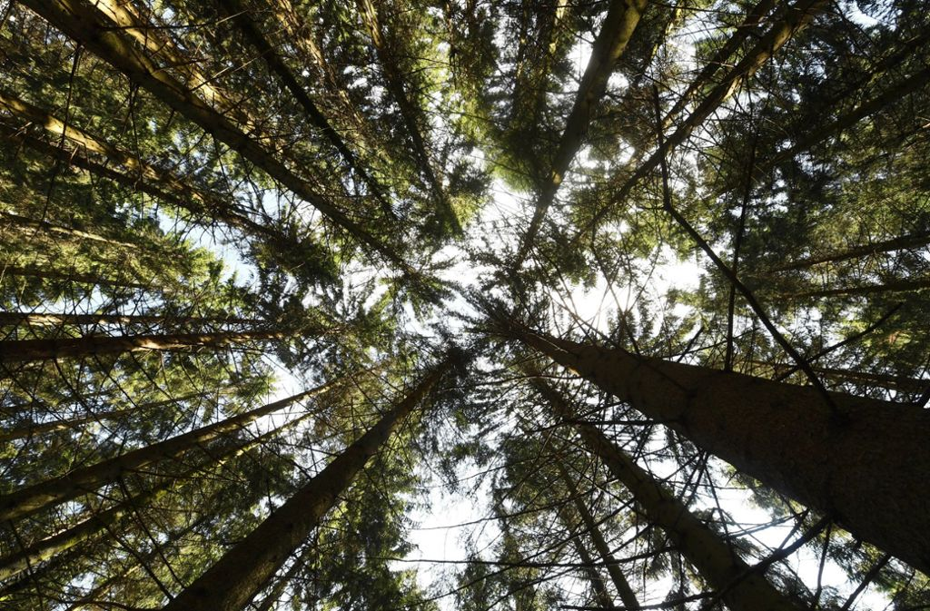 Wer große Tiere sehen will, braucht im Nationalpark Schwarzwald viel Geduld und Glück. Foto: picture alliance/dpa/Uli Deck