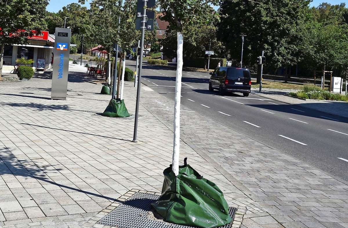 Die Gemeinde Kernen hat spezielle Säcke angeschafft: Gefüllt mit  Wasser geben sie, wie hier in Rommelshausen,  Feuchtigkeit  dosiert an die Bäume ab. Foto: Ingrid Sachsenmaier