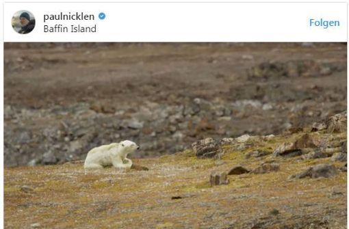 Erschreckendes Video zeigt verhungernden Eisbären