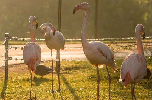 Flamingostall vor der Fertigstellung