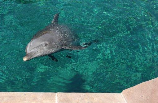 Mit Hilfe der Delfine lernt Sarah wieder gehen