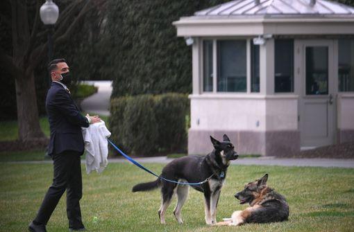 """Bidens Schäferhund Major bekommt """"First-Dog""""-Unterricht"""