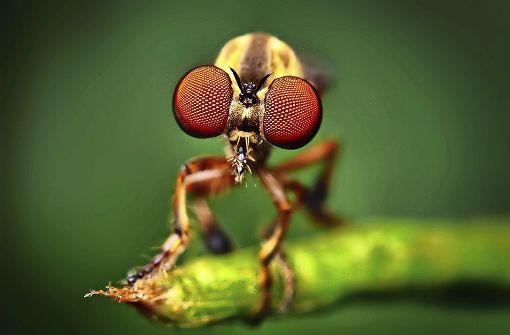 Die Fliege mit dem Superblick