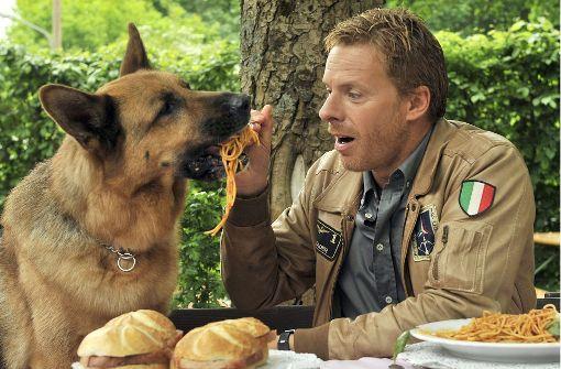 Hundeprofi: Die Tiere sind ja nicht doof