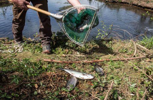 150 Tiere sterben in einem Teich bei Berglen