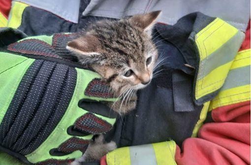 Feuerwehr rettet Babykätzchen aus misslicher Lage