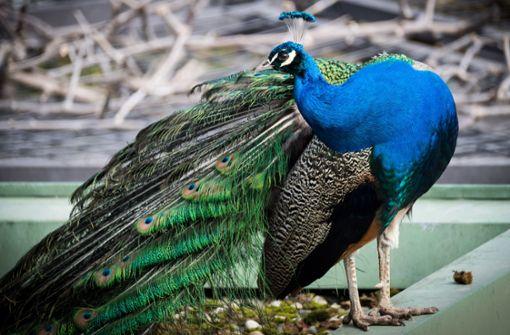 Sind freilaufende Tiere eine Gefahr für Zoo-Besucher?