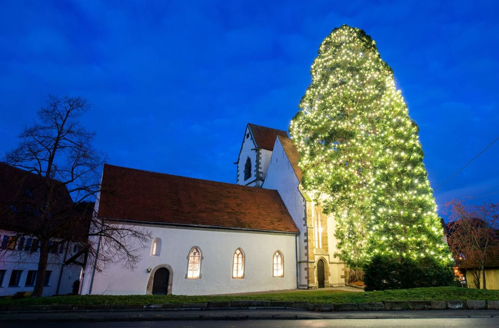 Rund 3000 Lichter sollen am Mammutweihnachtsbaum in Bronnweiler befestigt sein. Foto: dpa