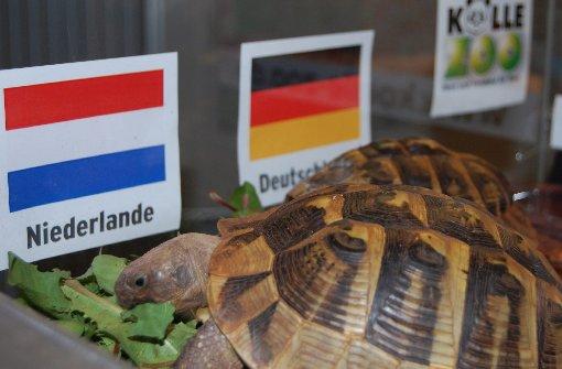 EM-Orakel Sissi tippt auf Sieg der Niederlande