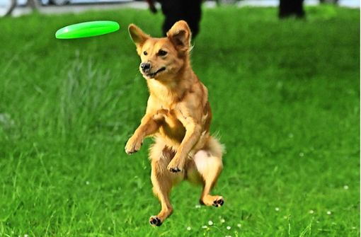 Spielplätze für Hunde künftig  tabu