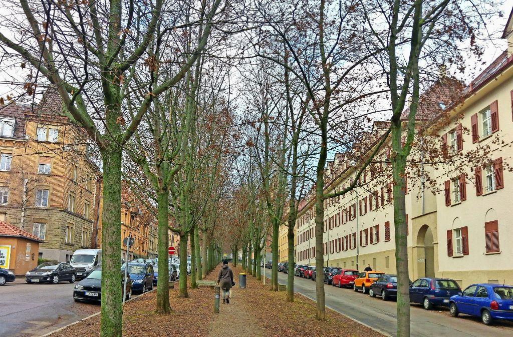 Eine der Flanierrouten durch den Osten führt durch die lange, gerade Mittelallee der Rotenbergstraße von der Friedenau bis hinauf zum Urachplatz. Foto: Jürgen Brand